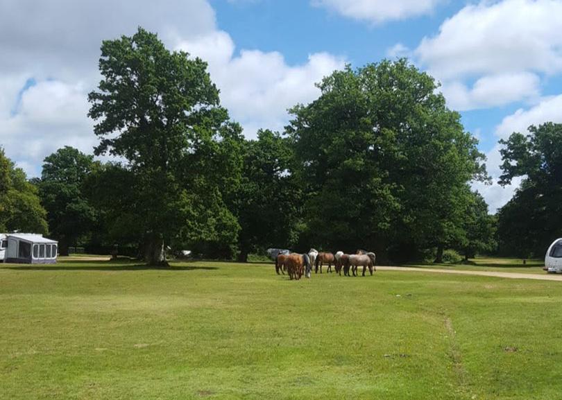 ponies-blues-skies-ashurst-campsite